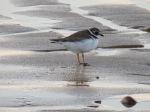 Bird On Sand