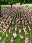 Field of Flags 005-2