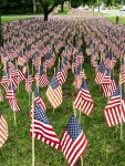 Field of Flags 008-3