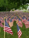 Field of Flags 009-3