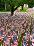 Field of Flags 010-2