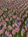 Field of Flags 011-3