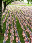 Field of Flags 014-2