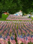 Field of Flags 019-3