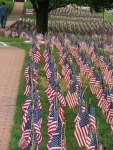 Field of Flags 023